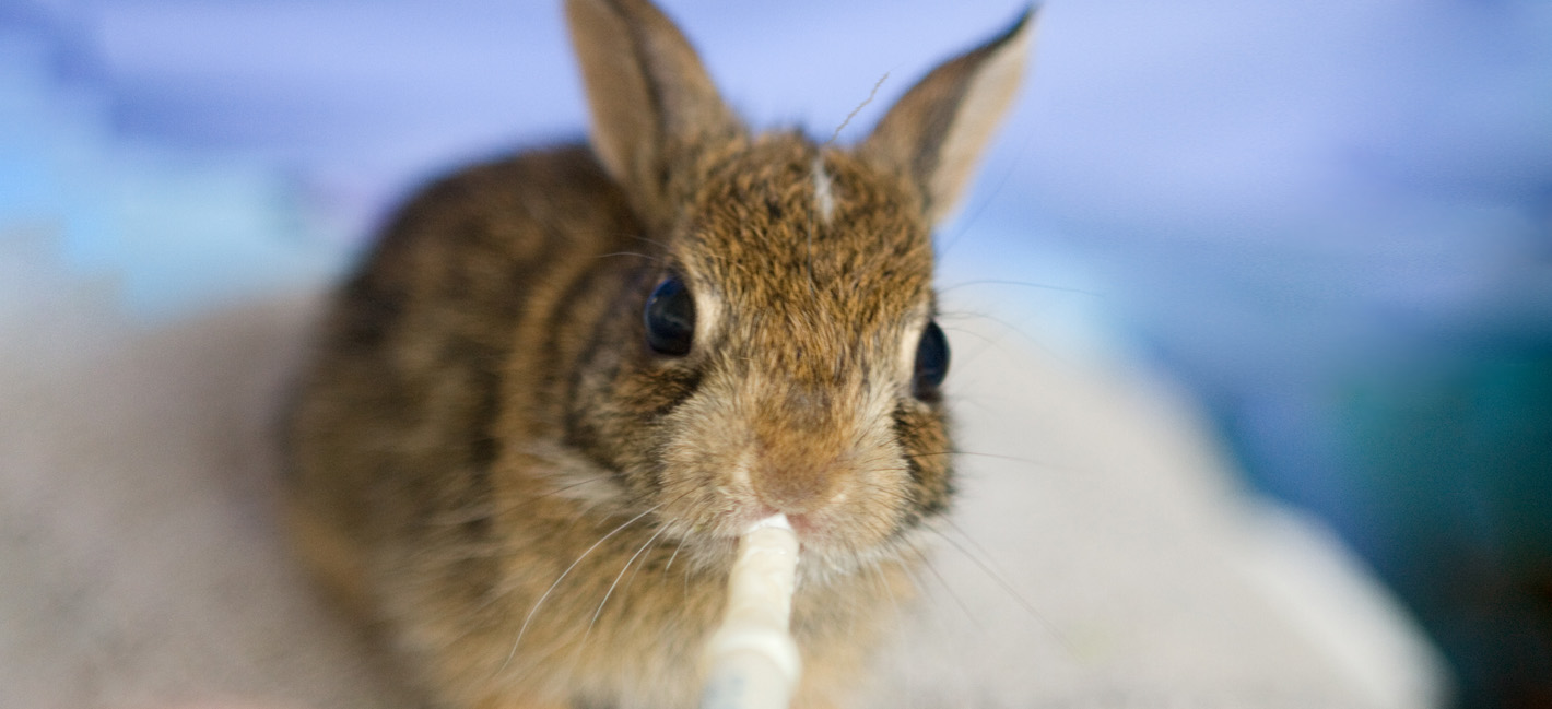 Find Out More About Rehabilitating Wildlife